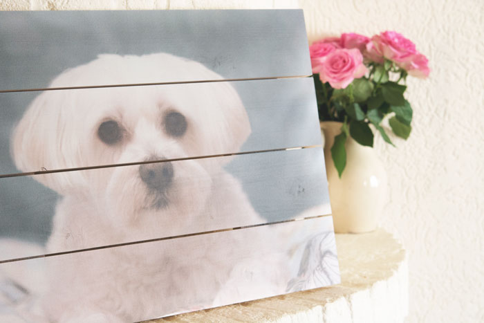 My Dog Nikkie's Picture on Wood
